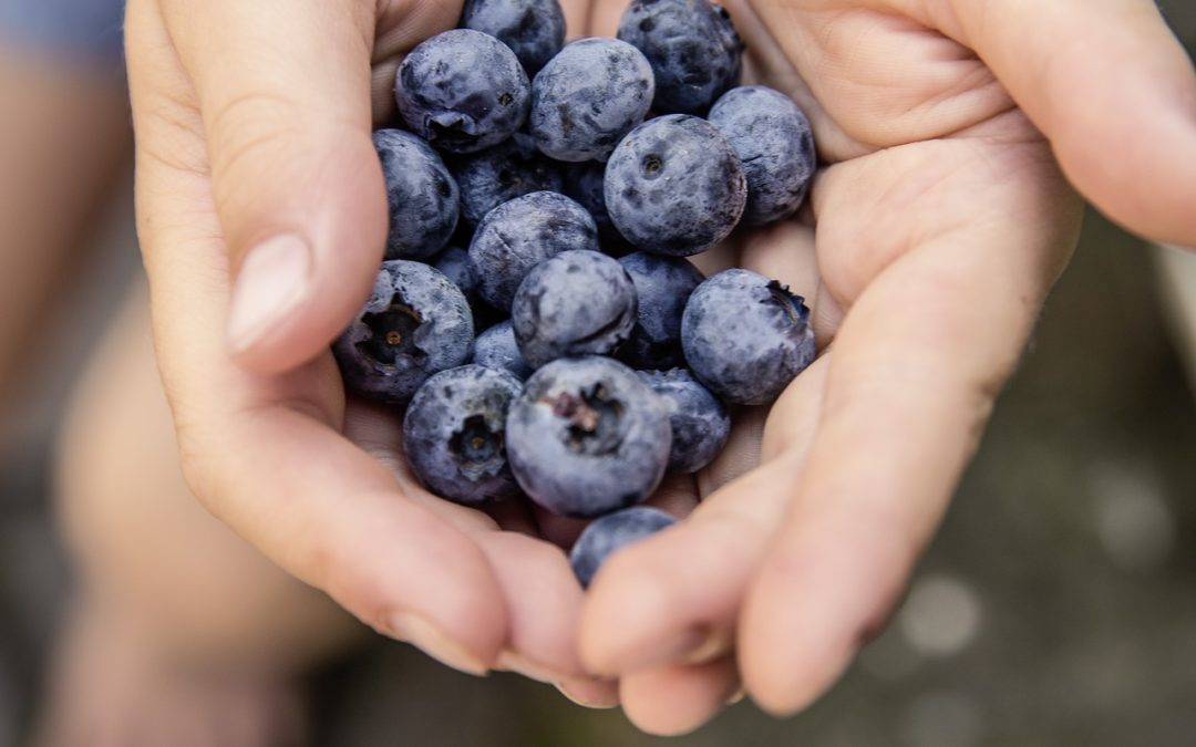 blueberries and muscle soreness